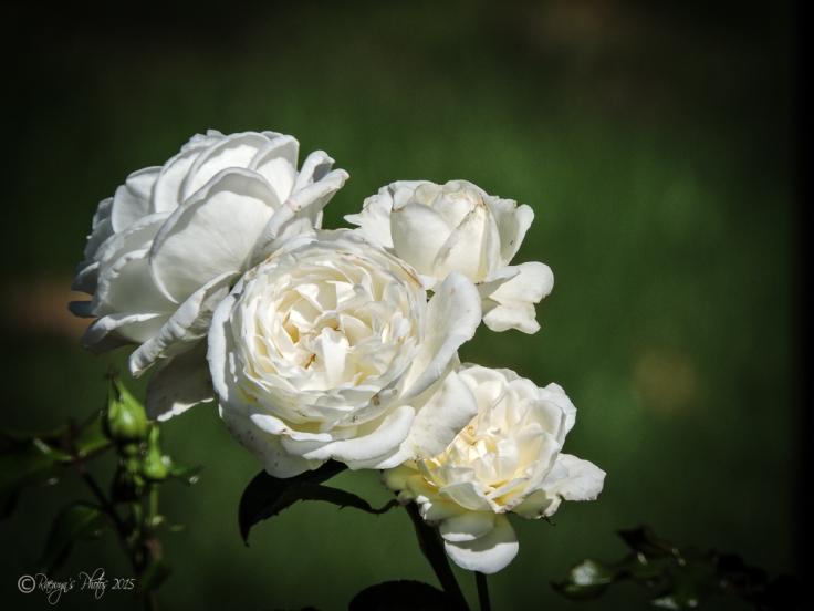 White Rose: Marriage, Spirituality, New Starts